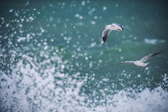 White seagull soaring above the sea. Waves royalty free stock photography