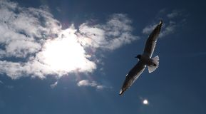 White seagull soaring in the blue sky royalty free stock photography
