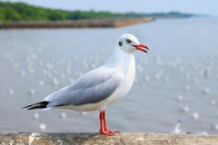 White seagull standing on the bridge in nature background. Bird stock photos