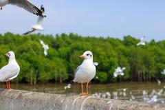 White seagull standing on the bridge in nature background. Bird stock photo