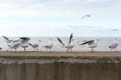 White seagulls on a concrete fence stock photography