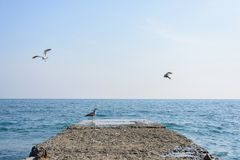 White seagulls flying over the sea royalty free stock photography