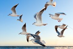 White Seagulls Near Water Royalty Free Stock Images