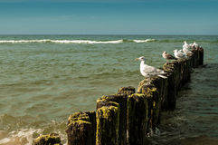 White seagulls two. White gulls sitting on a breakwater in the summer royalty free stock photos