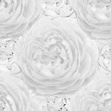 White seamless monochrome pattern with roses. Stock Photos