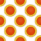 White seamless pattern with sunflowers Stock Image