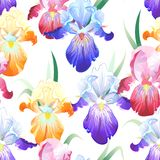 White Seamless Pattern With Iris Flowers Stock Images