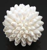 White Seashell Ball. White seashells made into a ball Royalty Free Stock Photography