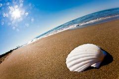 White seashell on a beach. Close-up photo of a white seashell on a beach Stock Photo