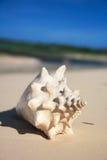 White seashell on beach Stock Images
