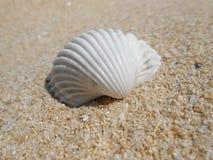 White seashell Royalty Free Stock Photography