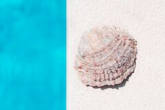 White Seashell On A White Textured Background  Next To A Blue Water In Swimming Pool. Summer Top View Flat Lay. Summer Vacation Royalty Free Stock Photo
