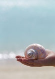 White seashell on palm with blue background Royalty Free Stock Image