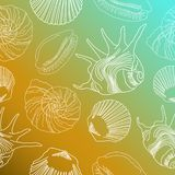 White seashell pattern royalty free illustration