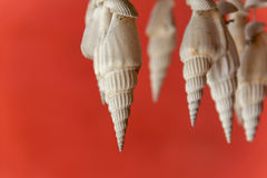 White seashell and red background Stock Photography