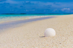 White seashell in the sand on the beach. In front of blue ocean Stock Photos