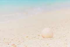 White seashell in the sand on the beach. In front of blue ocean Royalty Free Stock Photography