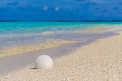 White seashell in the sand on the beach. In front of blue ocean Stock Image