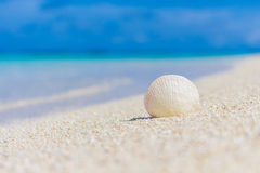 White seashell in the sand on the beach Stock Images