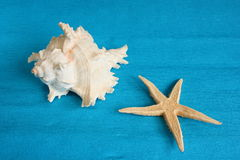 White seashell and starfish. White seashell and a starfish on blue background Stock Images