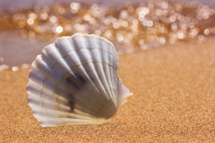 White seashell on the sunny beach Stock Photography