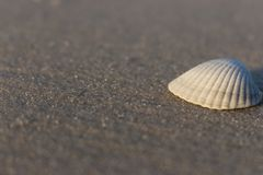 White seashell on white sand isolated close up. Shell on sea beach. Shells concept. Empty beach with seashells. Tropical travel concept. Seashore at sunrise royalty free stock photography