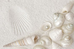White seashells Royalty Free Stock Photo