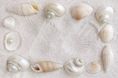White seashells Royalty Free Stock Images