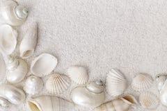 White seashells Royalty Free Stock Image