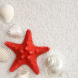 White seashells and red seastar Stock Image