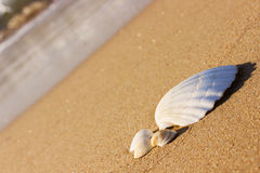 White seashells on the sand Royalty Free Stock Image