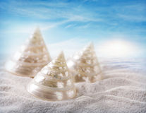 White seashells Stock Photography