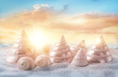 White seashells Stock Photo