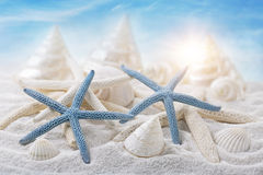 White seashells Stock Images