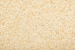 White sesame seed Stock Image