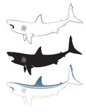 White shark Royalty Free Stock Images
