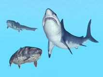 White Shark and Dunkleosteus Stock Photo