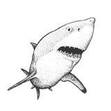 White Shark Engraving Illustration Stock Photos