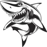 White shark. Vector illustration: toothy white shark Stock Images