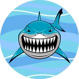 White shark Royalty Free Stock Image