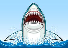 White shark Royalty Free Stock Photo