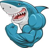 White shark. Vector illustration, toothy white shark Stock Photo