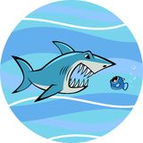 White shark Stock Images