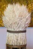 White Sheaf of Wheat. Ripe Ears Wheat Set Stock Photography