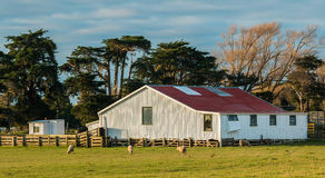 White Shearing Shed Stock Image