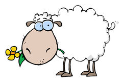 White Sheep Carrying A Flower In Its Mouth. Cartoon White Sheep Carrying A Flower In Its Mouth royalty free illustration