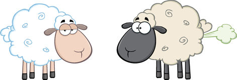 White Sheep And Farting Black Head Sheep Royalty Free Stock Photo