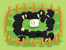 White sheep in the flock of black sheep (opposite  Royalty Free Stock Photography