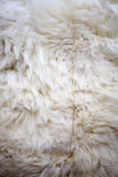 White sheep fur texture Royalty Free Stock Image