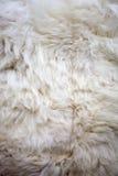 White sheep fur texture Royalty Free Stock Image